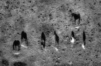 .black shadows for a white horses.