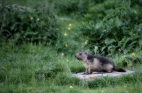 .the marmot.