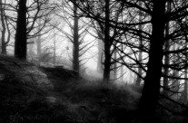 .blackwood.