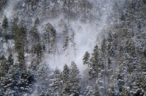 .when the blizzard comes in the woods.